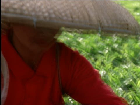 crane shot of asian women in straw hats picking tea in field / puncak highlands of west java / indonesia - cinematografi bildbanksvideor och videomaterial från bakom kulisserna