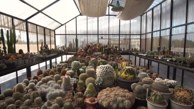 crane shot of collection of succulent plant - pendant light stock videos & royalty-free footage