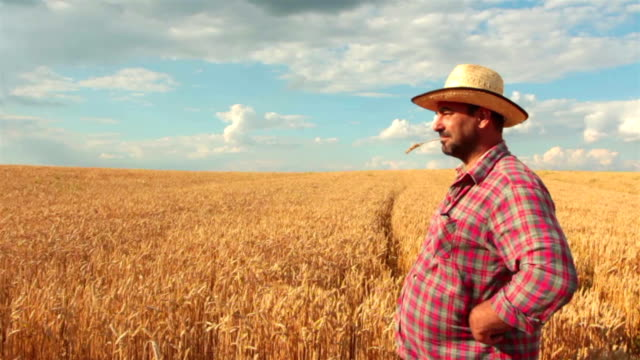 crane shot of farmer standing in the wheat field - looking away stock videos & royalty-free footage