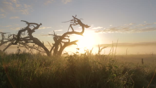 crane shot over the beautiful grasslands of the lewa wildlife conservancy at dawn. - plain stock videos & royalty-free footage