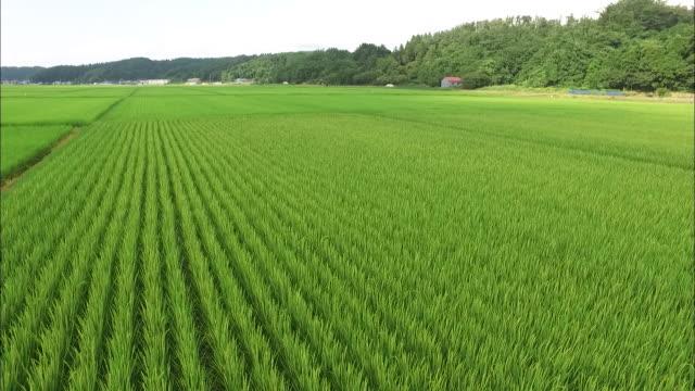 crane shot: rice paddies in akita city - 秋田県点の映像素材/bロール