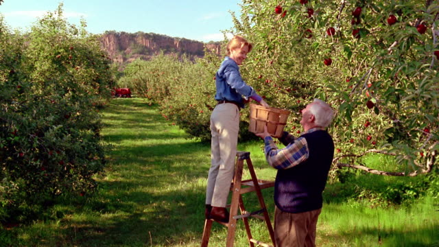 ws crane shot senior woman picking apples on ladder with senior man holding basket below her / congers, new york - apple orchard stock videos & royalty-free footage