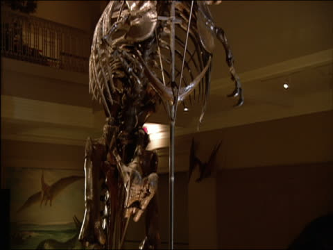 crane shot up skeleton of t. rex discovered in hell creek, montana, in 1902 which led to classification of species on display at carnegie museum of natural history / pittsburgh, pennsylvania - bone stock videos & royalty-free footage