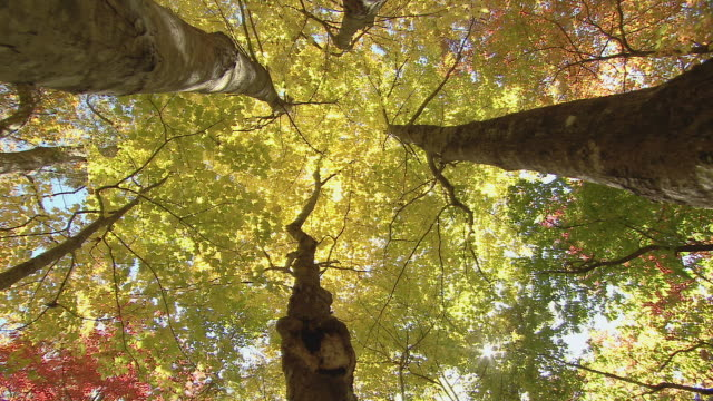 crane shot up through woods dressed in fall color. - directly below stock videos & royalty-free footage