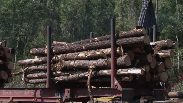 ms zo crane stacking logs on truck / north carolina, usa - 丸太点の映像素材/bロール