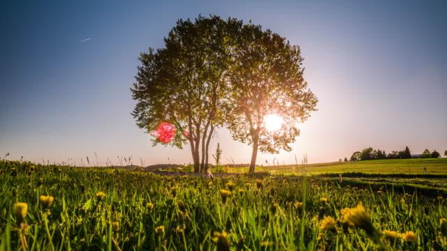 Crane : Tree in Summer Field at Sunset