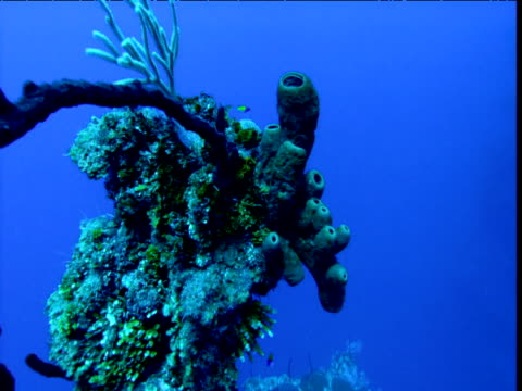 Crane up over coral and sponges, Cayman Islands