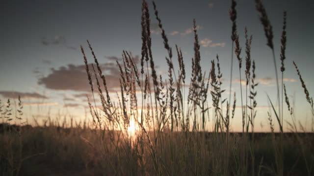 Crane up over grasses and desert savannah at sunset, South Africa