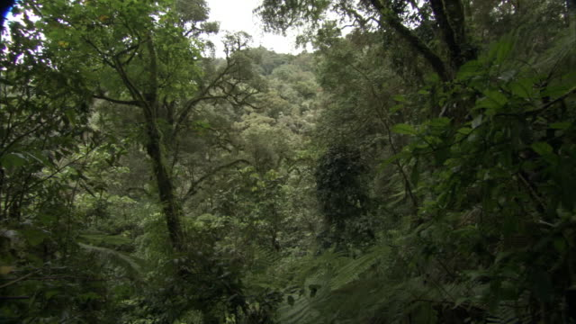 crane up through rainforest undergrowth, mount rungwe, tanzania - dicksonia antarctica stock videos & royalty-free footage