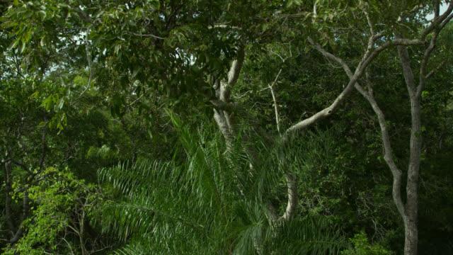 Crane up tree in rainforest.