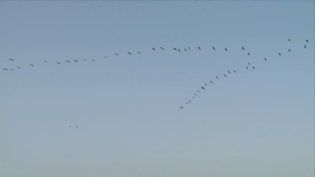 ws la cranes flying in v-formation / hula, galilee, israel - birds flying in v formation stock videos and b-roll footage
