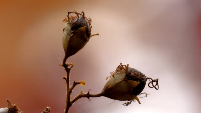 crape myrtle seed pods - bare tree stock videos & royalty-free footage