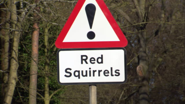 Crash zoom into Red squirrel warning road sign, Scotland, UK