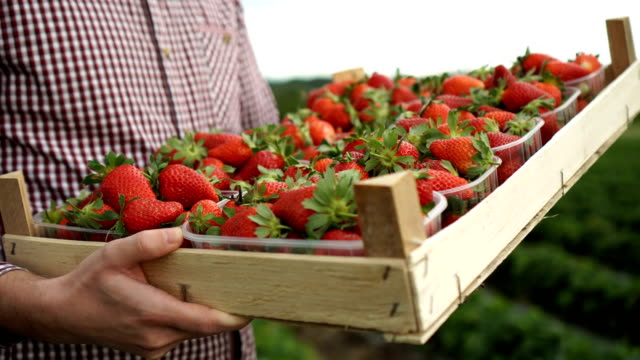 crate of strawberries - strawberry stock videos & royalty-free footage
