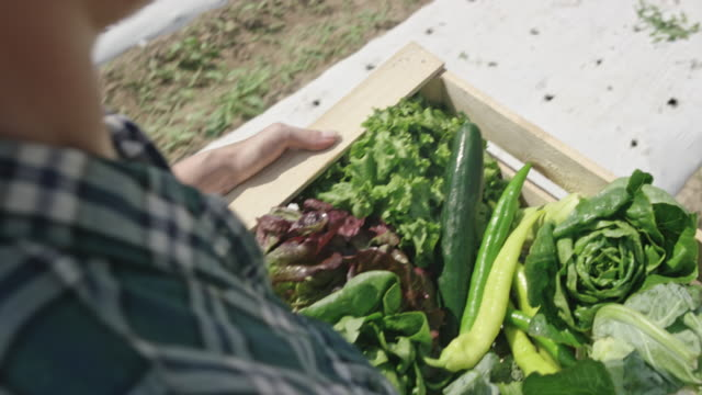 crate of vegetables carried by a female farmer in the sunny field - cauliflower stock videos & royalty-free footage