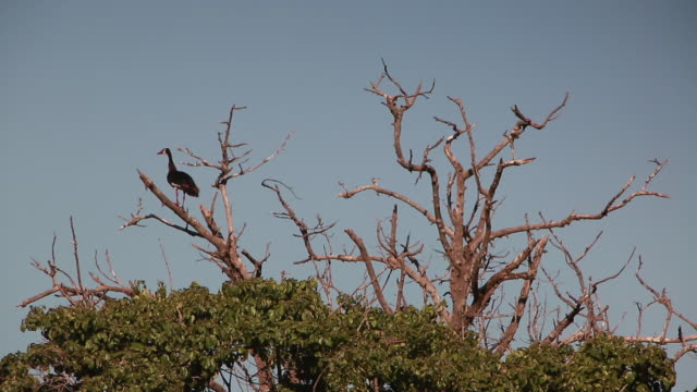 stockvideo's en b-roll-footage met ngorongoro crater bird in treetop - wiese
