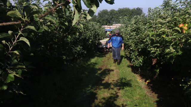crates full of bramley apples on a trailer pulled by tractor during a harvest in coxheath, kent, u.k., on thursday, september 16, 2021. - apple fruit stock videos & royalty-free footage