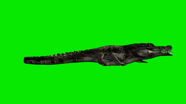 crawling crocodile green screen (loopable) - green background stock videos & royalty-free footage
