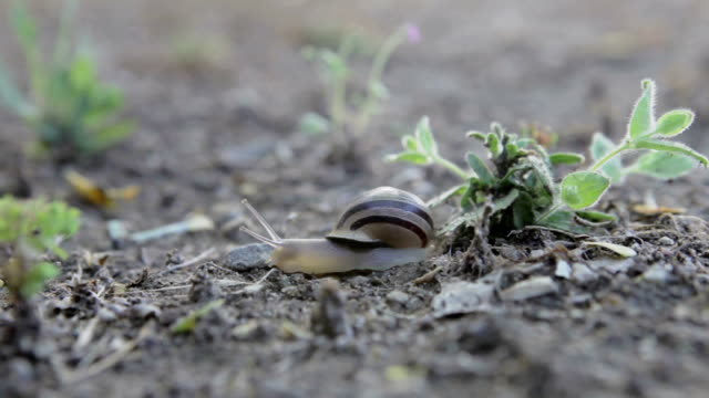 crawling snail on the ground