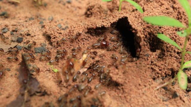 Kriechende Termite Seamless Loop. Teamarbeit-Konzept