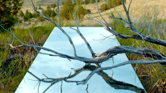 Creative dead branch lift to desert mountain blue sky mirror desert time lapse