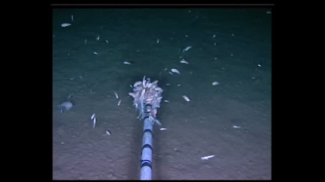 dr alan j jamieson newcastle university live scavenging amphipods feed on bait in view of a camera at 8000m and 10890m in the mariana trench high... - scavenging stock videos & royalty-free footage