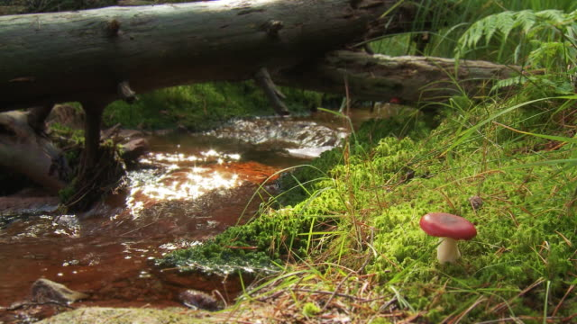 creek and mushroom - 30 seconds or greater stock videos & royalty-free footage