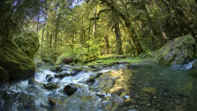 creek and old growth forest, oregon - river stock videos & royalty-free footage