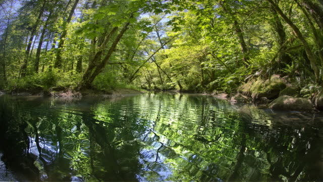 Creek and old growth forest, Oregon