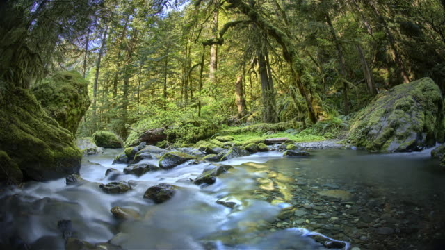 creek and old growth forest, oregon - copertura di alberi video stock e b–roll