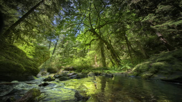 creek and old growth forest, washington - tree trunk stock videos & royalty-free footage