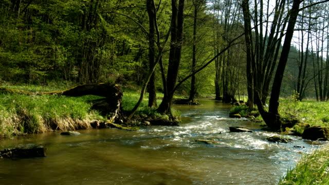 vídeos de stock, filmes e b-roll de creek, na extremidade do spring forest (4 km/uhd para hd) - floresta da bavária