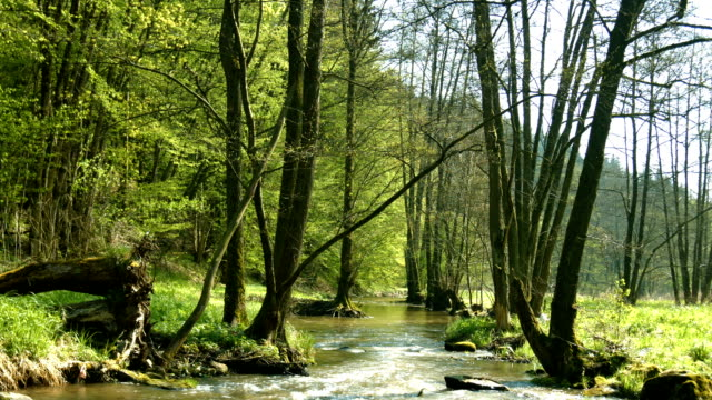 vídeos de stock, filmes e b-roll de creek, na extremidade da floresta ensolarada (4 km/uhd para hd) - floresta da bavária