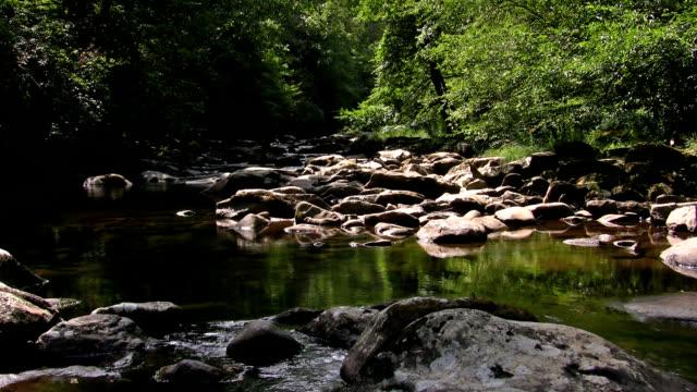 stockvideo's en b-roll-footage met creek, brook, stream - appalachia