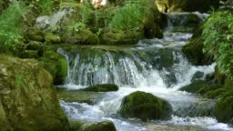 Creek cascade in forest