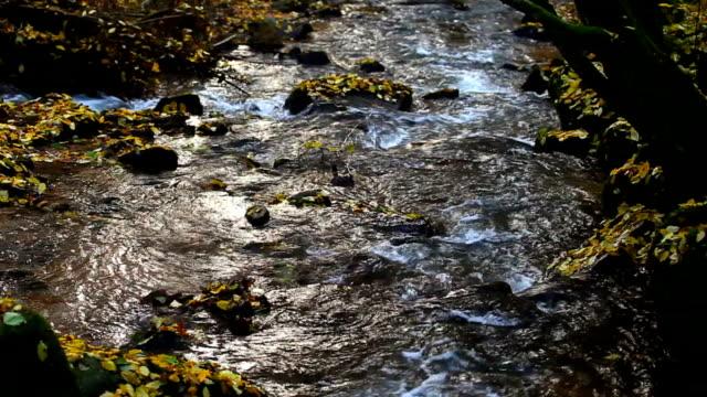 vídeos de stock, filmes e b-roll de creek fluindo no outono floresta - floresta da bavária