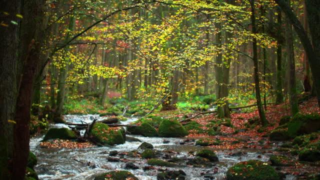 vídeos de stock, filmes e b-roll de rio fluindo na idílica floresta de outono - floresta da bavária