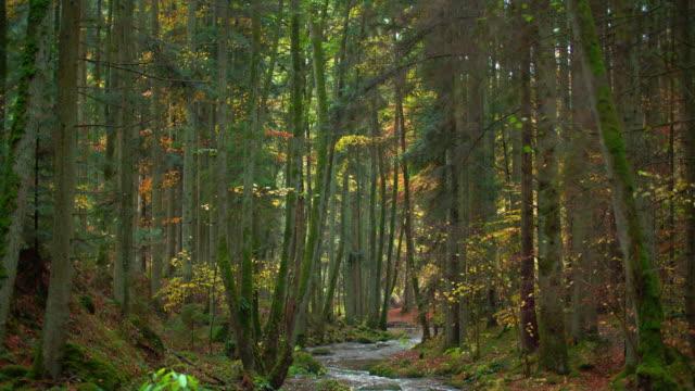 Ruisseau qui s'écoule dans la forêt d'automne idyllique