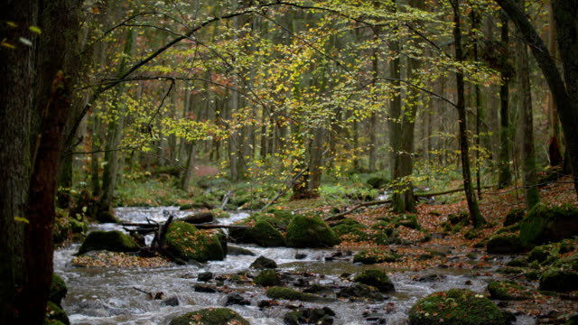creek flowing in idyllic autumn forest - ruscello video stock e b–roll