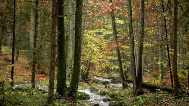 Bach fließt in idyllischen Herbst Wald