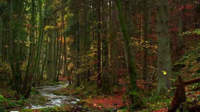 のどかな秋の森を流れるクリーク - 楽園点の映像素材/bロール