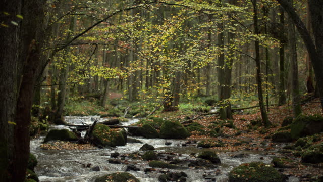 creek flowing in idyllic autumn forest - evergreen stock videos & royalty-free footage