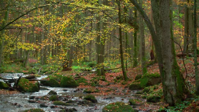 stockvideo's en b-roll-footage met creek stroomt in idyllische herfst bos - herfst