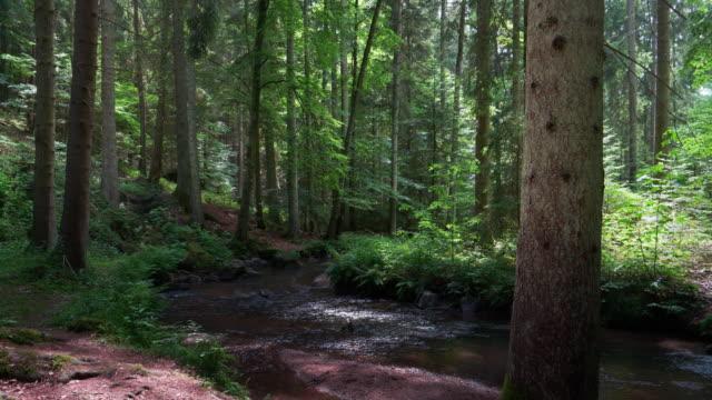 Bach fließt im idyllischen Wald