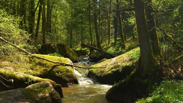 Creek Flowing im idyllischen Frühlingswald