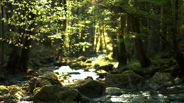 creek flowing in spring forest - spring flowing water stock videos & royalty-free footage