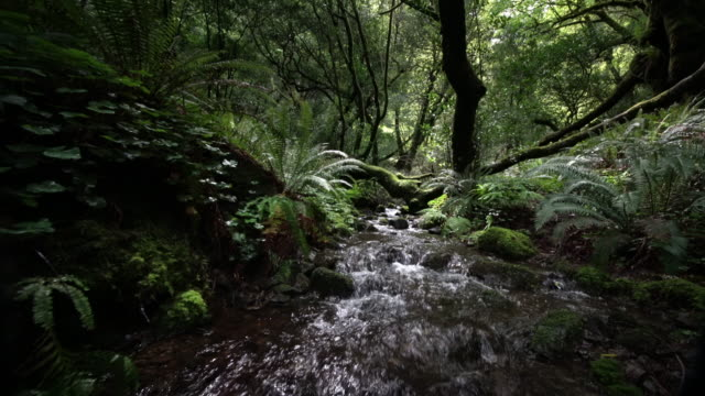 stockvideo's en b-roll-footage met creek flowing through old growth forest, oregon - oregon amerikaanse staat