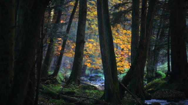 vídeos de stock, filmes e b-roll de canal em floresta de outono (inclinar - floresta da bavária