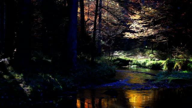 vídeos de stock, filmes e b-roll de canal em floresta de outono (circulares) - floresta da bavária
