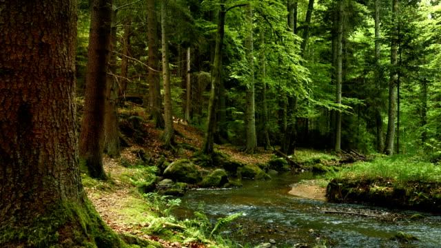 vídeos de stock, filmes e b-roll de canal em floresta coniferous (4 km/uhd para hd - floresta da bavária